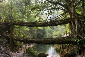 Living Bridges made by the villagers in the North East.