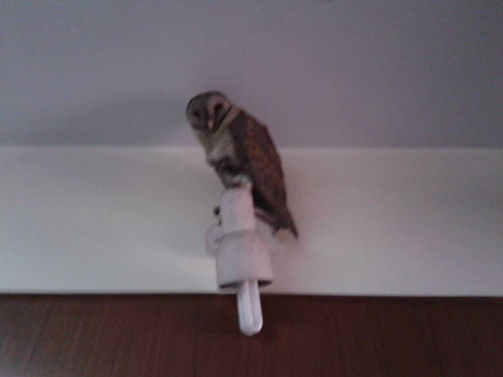 The Owl: Found this guy perched on a lamp. Was pointed out to me by some folks working at the museum.