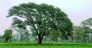 A Fertilizer Tree in a field (Source: www.nbcnews.com)
