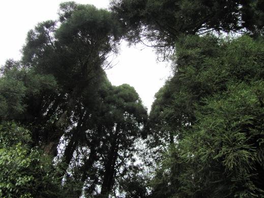 A bit of the flora